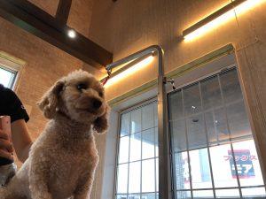 ☆小型犬から大型犬まで大歓迎♪トリミング&ドッグホテルのご予約を承ります。☆潟上市商工会商品券もご利用いただけます☆